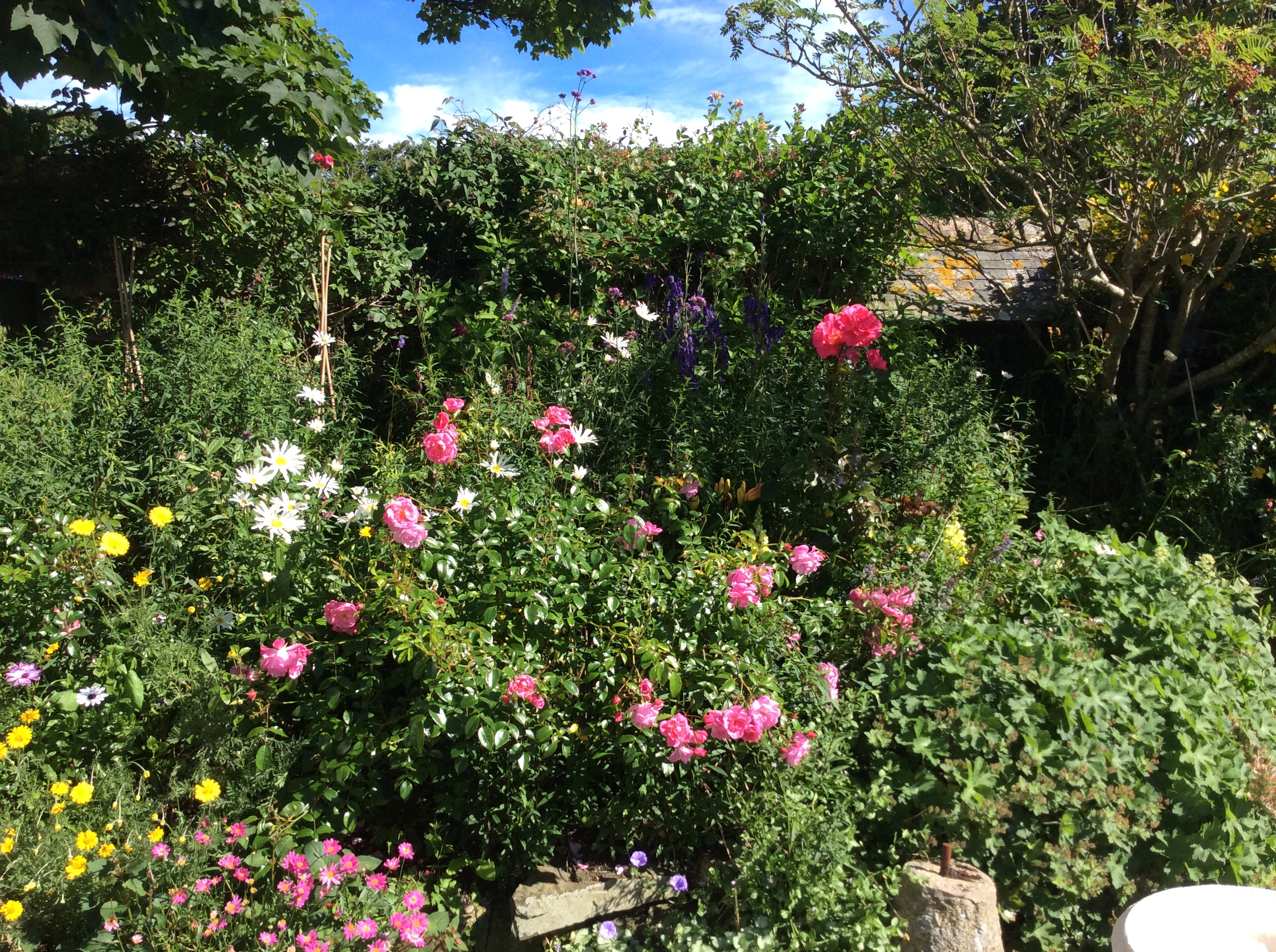 The Tearoom's Gardens in Full Flower