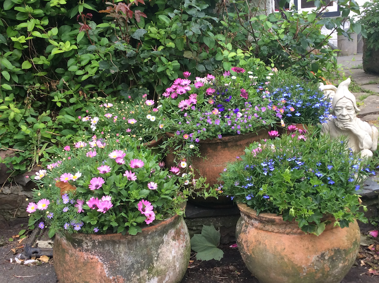 Some of the pots of Flowers in Our Garden.