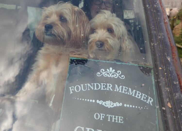 Our Pet Dogs in a Landrover.